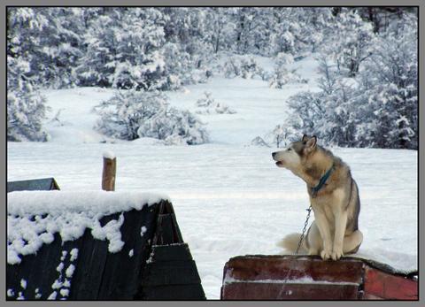 husky-ushuaia