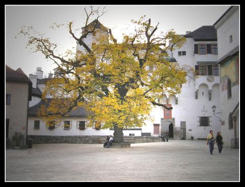 osterreich-salzburgo-arbol