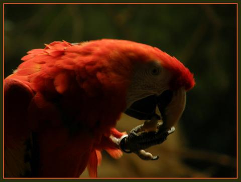 fotos-papagayos