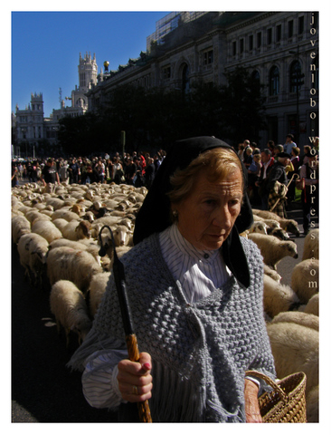 pastora-trashumancia-madrid