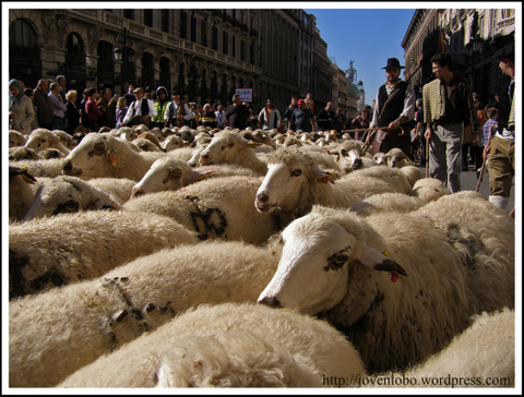 ovejas-alcala-madrid