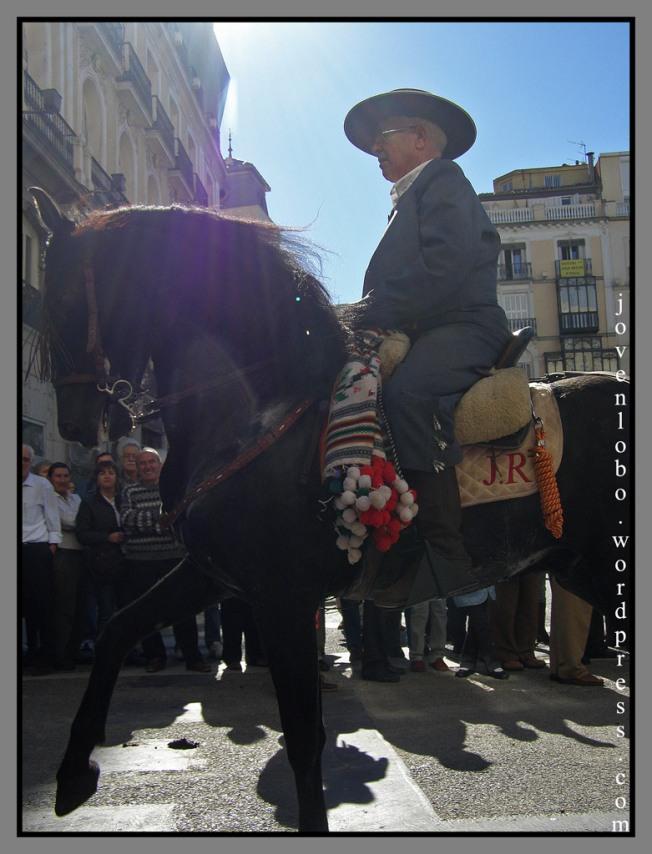 pastor-caballos-madrid