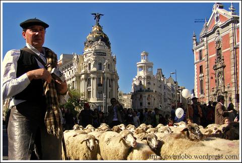 pastor-ovejas-trashumancia