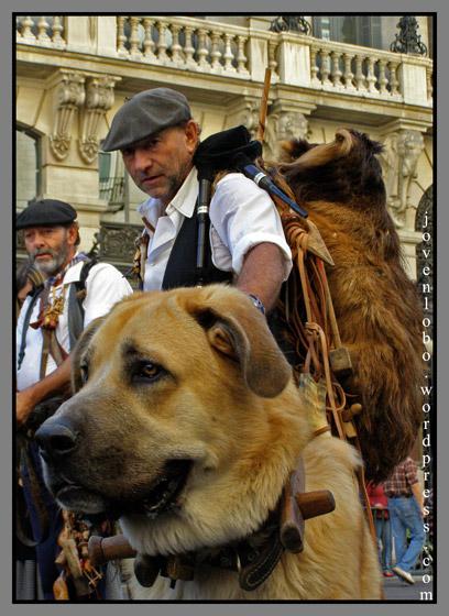 pastor-perros-trashumancia