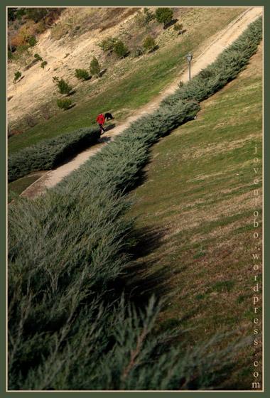 arbustos-parque-vallecas