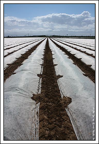 Lineas-cultivos