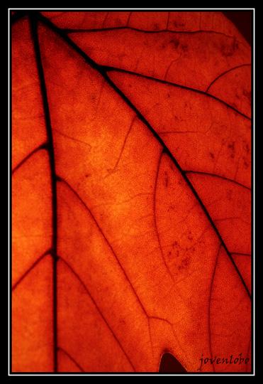 Hojas-secas-otoño