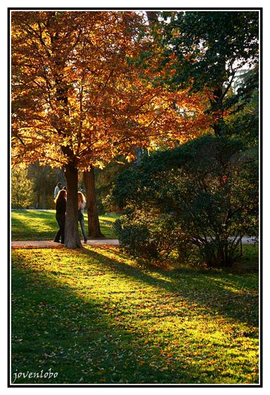 otoño-retiro