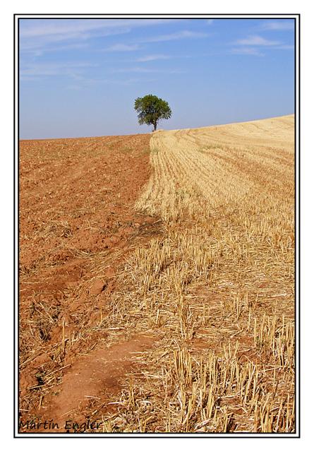 Arbol-solitario-paisaje