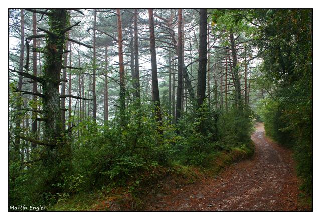 Bosque-Camino-de-Santiago
