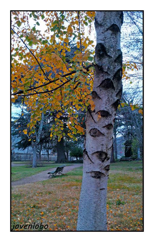 arbol-con-ojos-otoño