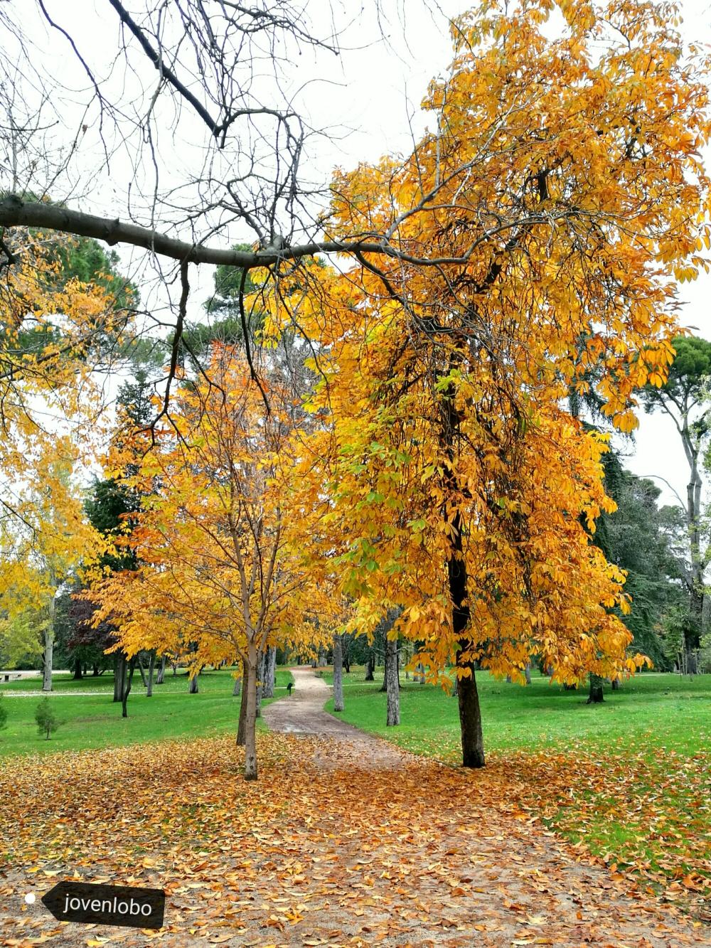 otoño-en-el-retiro