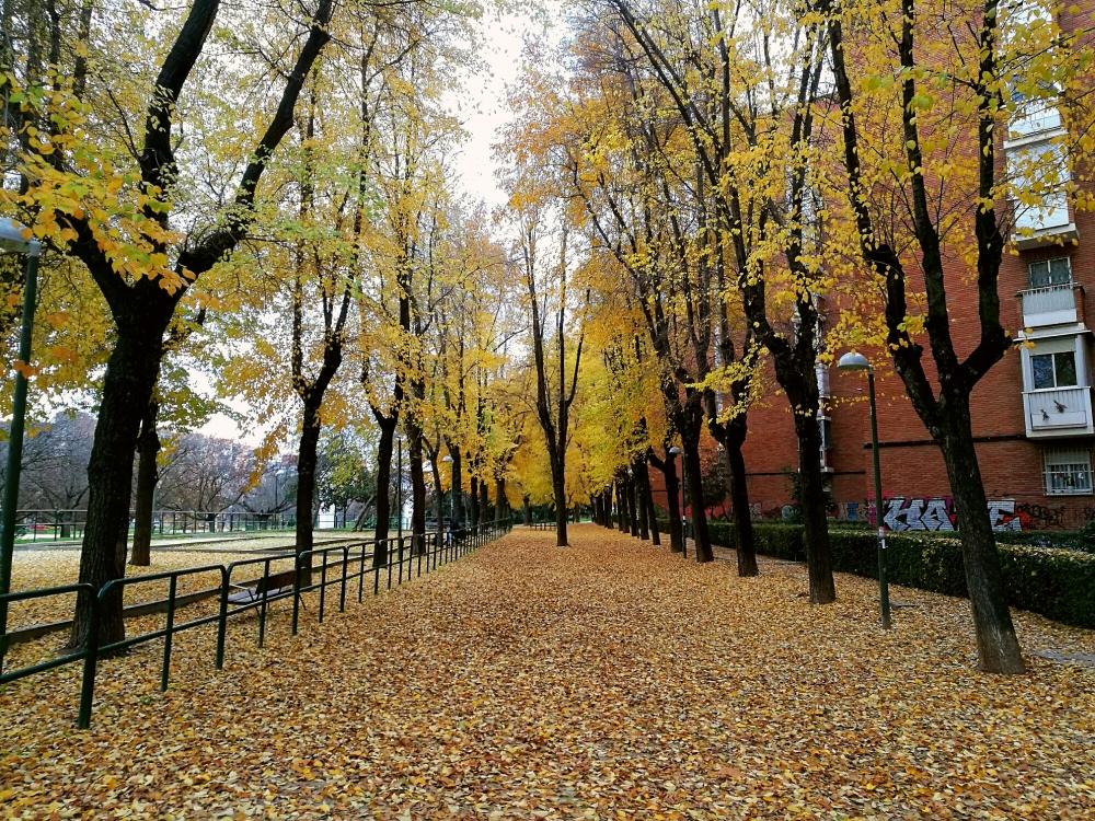 hojas-otoño-Madrid