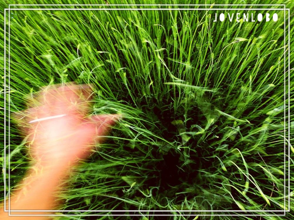 plantas-movimiento-verde