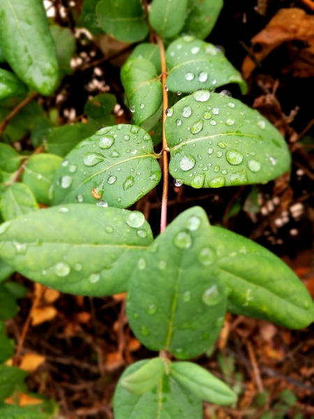 hojas-gotas-desenfoque